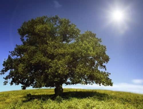 Are Your Trees Suffering From Summer Heat Stress?